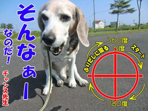 チャンスとティアラ+ココ-20130618-7-500.jpg