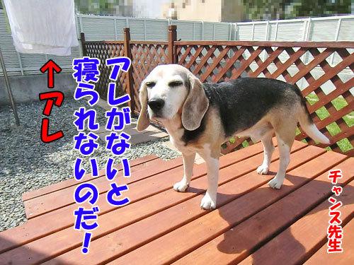 チャンスとティアラ+ココ-20130619-2-500.jpg