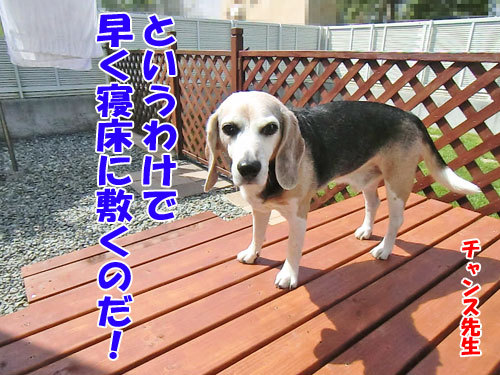 チャンスとティアラ+ココ-20130619-4-500.jpg