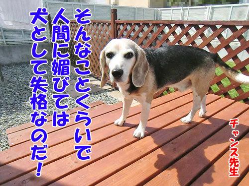チャンスとティアラ+ココ-20130619-5-500.jpg