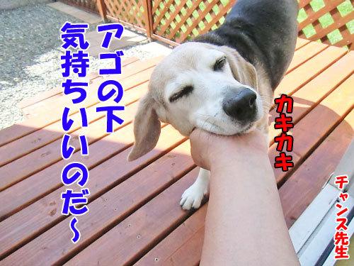 チャンスとティアラ+ココ-20130619-6-500.jpg