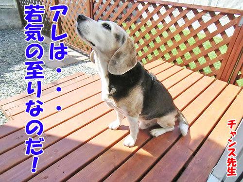 チャンスとティアラ+ココ-20130619-8-500.jpg