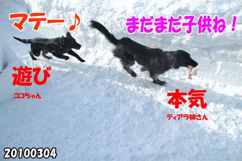 チャンスとティアラ+ココ-20130620-1.jpg