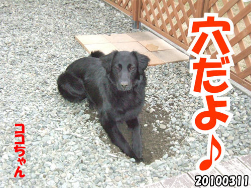 チャンスとティアラ+ココ-20130620-3.jpg