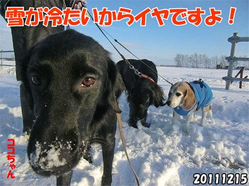 チャンスとティアラ+ココ-20130620-4.jpg