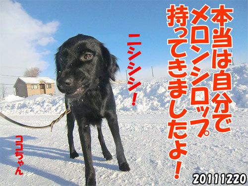 チャンスとティアラ+ココ-20130620-5.jpg