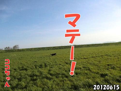 チャンスとティアラ+ココ-20130620-7.jpg