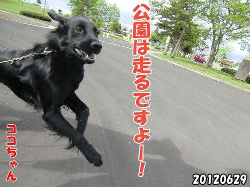 チャンスとティアラ+ココ-20130620-9.jpg