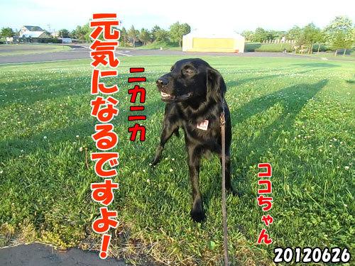 チャンスとティアラ+ココ-20130620-10.jpg