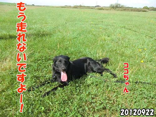 チャンスとティアラ+ココ-20130620-12.jpg