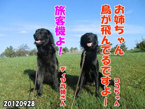 チャンスとティアラ+ココ-20130620-13.jpg