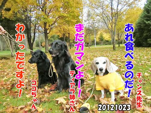 チャンスとティアラ+ココ-20130620-14.jpg