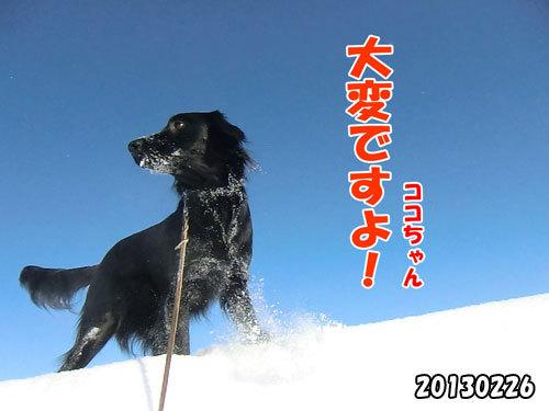 チャンスとティアラ+ココ-20130620-15.jpg