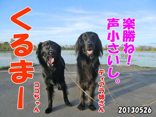チャンスとティアラ+ココ-20130620-16.jpg