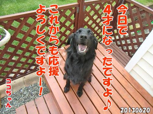 チャンスとティアラ+ココ-20130620-18.jpg
