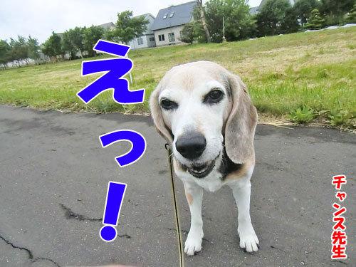 チャンスとティアラ+ココ-20130621-1-500.jpg
