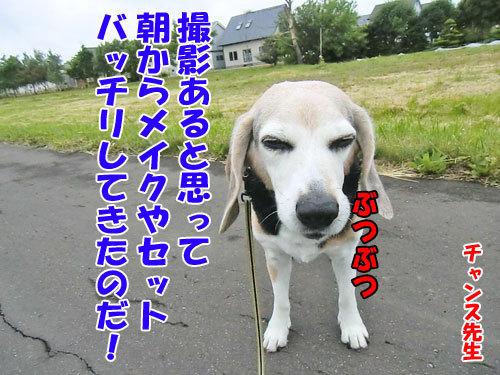 チャンスとティアラ+ココ-20130621-2-500.jpg