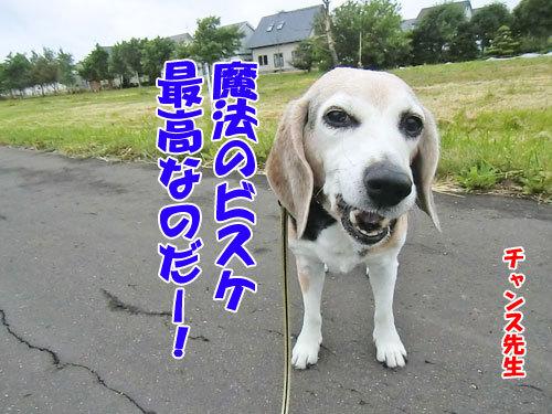 チャンスとティアラ+ココ-20130621-3-500.jpg