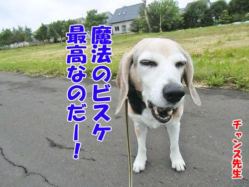 チャンスとティアラ+ココ-20130621-4-500.jpg