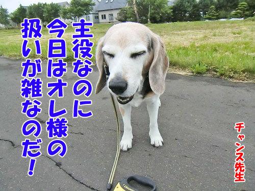 チャンスとティアラ+ココ-20130621-5-500.jpg