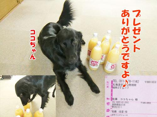 チャンスとティアラ+ココ-20130621-8-500.jpg