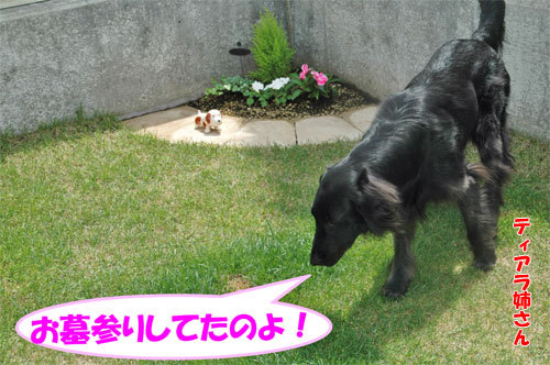 チャンスとティアラ+ココ-20090709-3.jpg