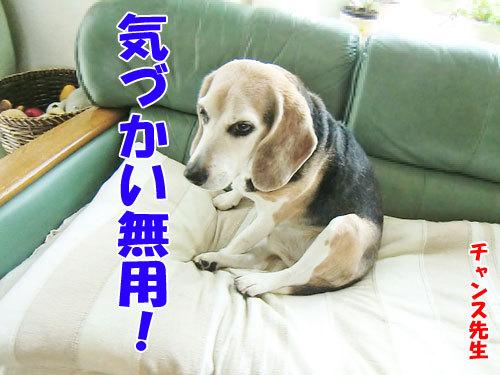 チャンスとティアラ+ココ-20130624-1-500.jpg