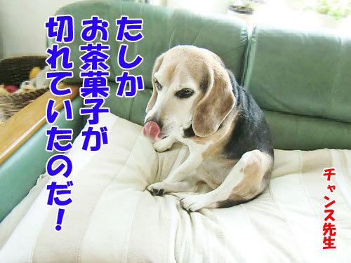 チャンスとティアラ+ココ-20130624-2-500.jpg
