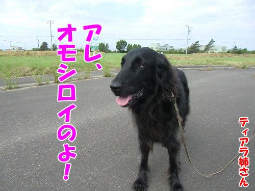 チャンスとティアラ+ココ-20130625-2-500.jpg