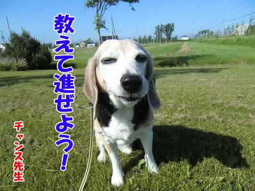 チャンスとティアラ+ココ-20130625-6-500.jpg