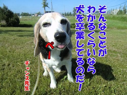 チャンスとティアラ+ココ-20130625-8-500.jpg