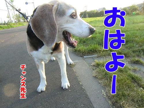チャンスとティアラ+ココ-20130626-2-500.jpg