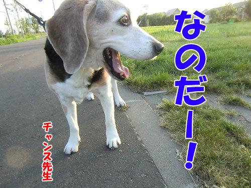 チャンスとティアラ+ココ-20130626-3-500.jpg