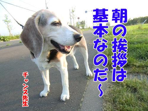 チャンスとティアラ+ココ-20130626-4-500.jpg