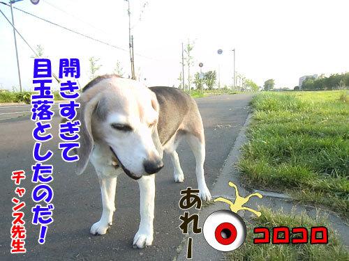 チャンスとティアラ+ココ-20130626-6-500.jpg