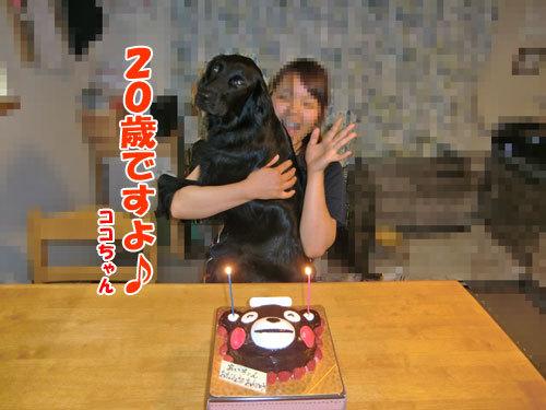 チャンスとティアラ+ココ-20130625-10-500.jpg