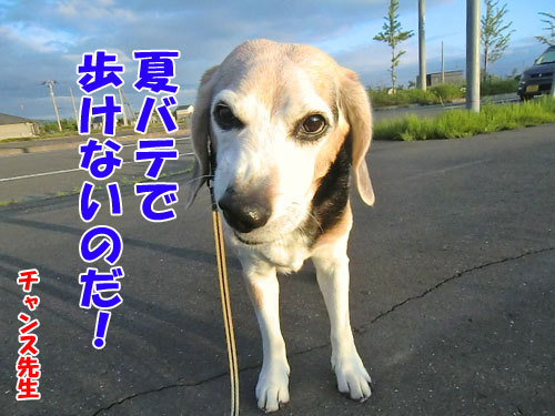 チャンスとティアラ+ココ-20130627-21-500.jpg