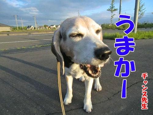 チャンスとティアラ+ココ-20130627-22-500.jpg