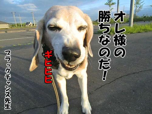 チャンスとティアラ+ココ-20130627-23-500.jpg
