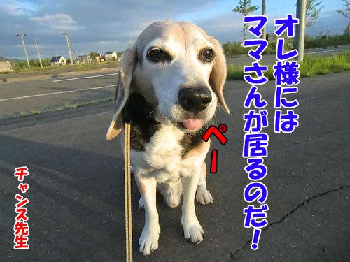 チャンスとティアラ+ココ-20130627-24-500.jpg