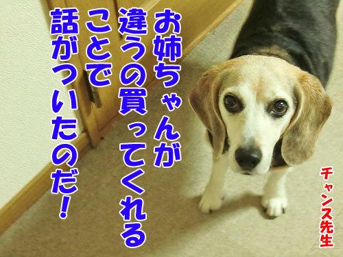 チャンスとティアラ+ココ-20130628-8-500.jpg