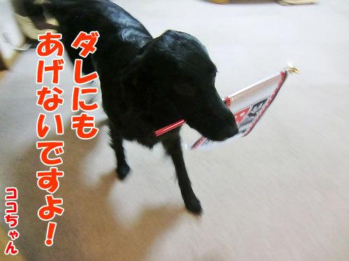 チャンスとティアラ+ココ-20130628-10-500.jpg
