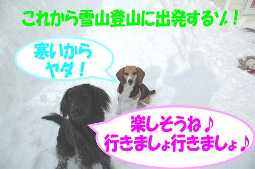 チャンスとティアラ+ココ-060211-1.jpg