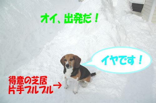 チャンスとティアラ+ココ-060211-2.jpg