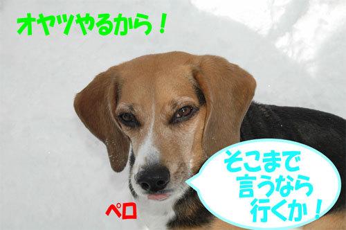 チャンスとティアラ+ココ-060211-3.jpg
