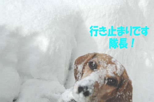 チャンスとティアラ+ココ-060211-5.jpg