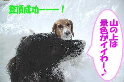 チャンスとティアラ+ココ-060211-6.jpg