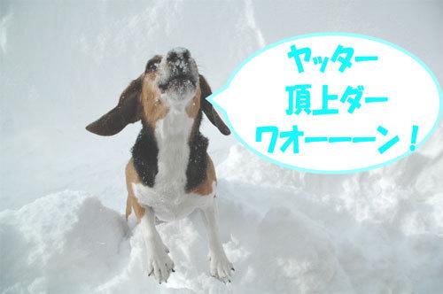 チャンスとティアラ+ココ-060211-7.jpg