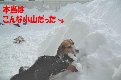 チャンスとティアラ+ココ-060211-9.jpg