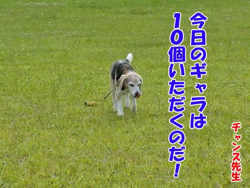 チャンスとティアラ+ココ-20130702-4-500.jpg